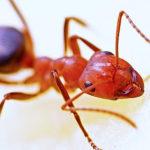 Ant, infestation, office